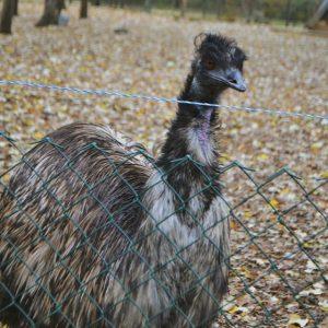 Две емута са най-новите попълнения на Зооцентъра в Добрич, търсят им имена