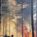 Над 2400 декара гори са изпепелени при пожари в Добричко през миналата година