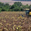 Неизвестен ожъна 103 дка слънчоглед и задигна реколтата