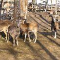 Продължават добрите практики между Зоопарка на Добрич и Шафхаузен